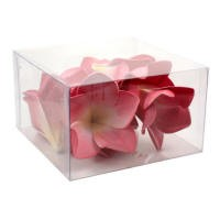 Wholesale Latex Frangipani Hot Pink - Box View