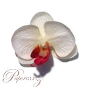 Phalaenopsis Silk Orchid Heads - White / Pink - 24Pck