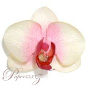 Phalaenopsis Silk Orchid Heads - Cream / Pink - 24Pck