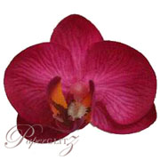 Phalaenopsis Silk Orchid Heads - Hot Pink - 24Pck