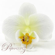 Phalaenopsis Silk Orchid Heads - White / Cream - 24Pck